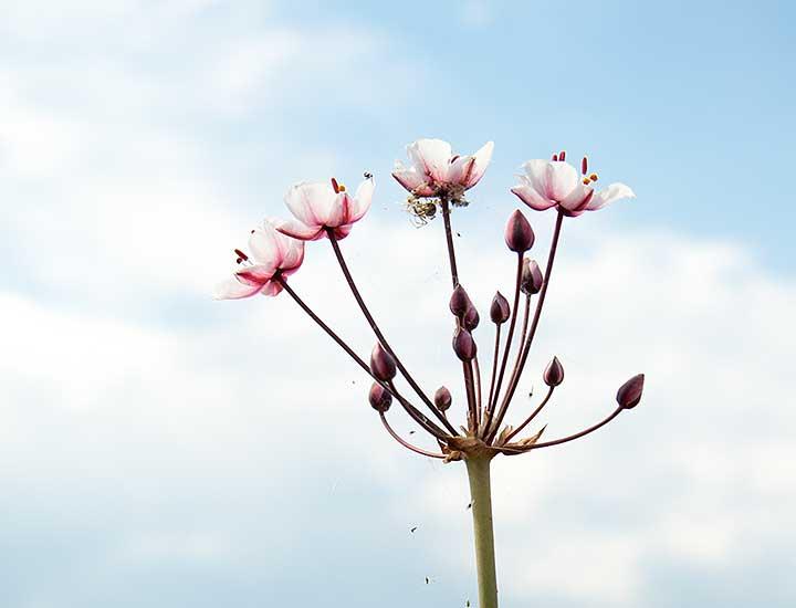 Blüten - Foto: Dagmar tille